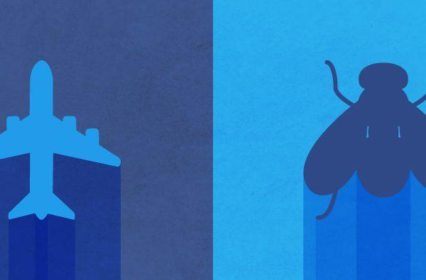 Interpreting-for-child-development-assessment-fly-pplane-bug